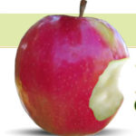 Organic Pink Lady Apples Kelowna